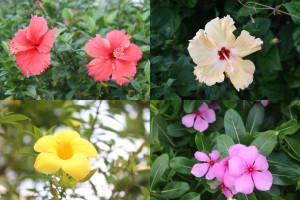 南国のお花たち