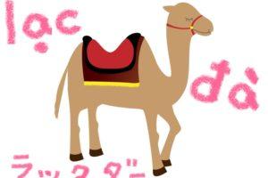 lạc đà