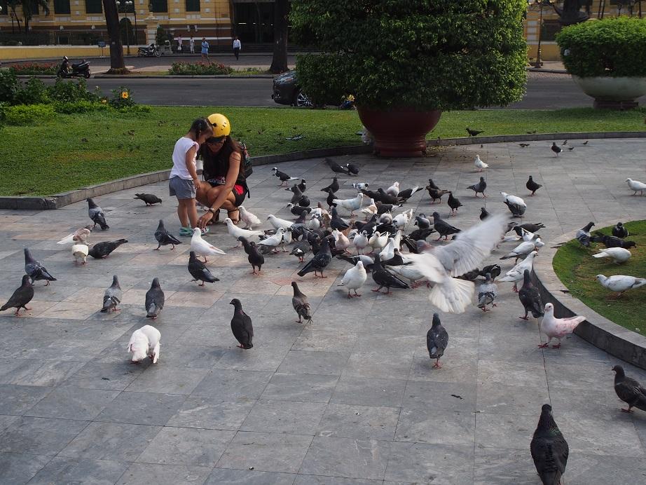 サイゴン大教会に集まる鳩